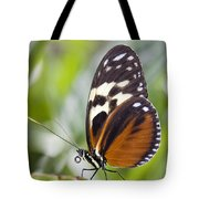Tiger Longwing Butterfly Heliconius Tote Bag