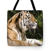 Tiger Observations Tote Bag