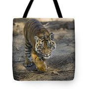 Tiger Panthera Tigris Cub, Native Tote Bag