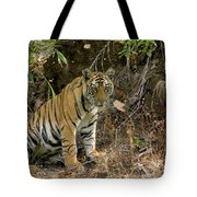 Tiger Panthera Tigris Six Month Old Tote Bag