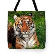 Tiger Sitting In The Grass Tote Bag