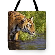 Tiger Standing In Water Tote Bag
