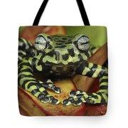 Tigers Treefrog Hyloscirtus Tigrinus Tote Bag