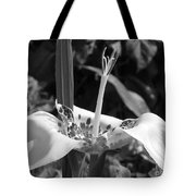 Tigridia Pavonia Or Mexican Shell Flower Tote Bag