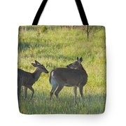 Time To Be On Your Own Son 5981 Tote Bag