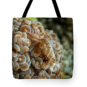 Tiny Cryptic Brown And Grey Shrimp Tote Bag