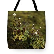 Tiny Flowering Plant Grows In Moss Tote Bag