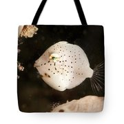 Tiny White Filefish With Small Black Tote Bag