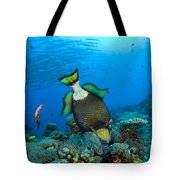 Titan Triggerfish Picking At Coral Tote Bag