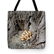 Toadstools In The Gravel Tote Bag by Will Borden