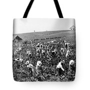 Tobacco Field In Montpelier - Jamaica - C 1900 Tote Bag