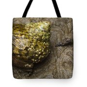Top Shell Clanculus Sp Tote Bag