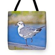 Topsail Seagull Tote Bag by Betsy Knapp