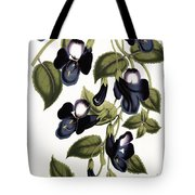 Torenia Asiatica Pulcherrima Tote Bag