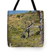 Torry Pines Sentinal Tote Bag