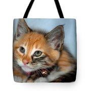 Tortoiseshell Kitten Tote Bag