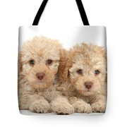 Toy Labradoodle Puppies Tote Bag