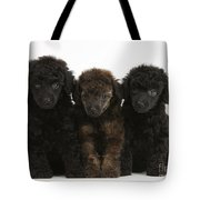 Toy Poodle Pups Tote Bag