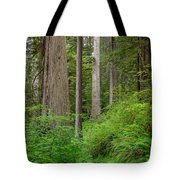 Trail Through Redwoods Tote Bag