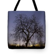 Tree At Night With Stars Trails Tote Bag
