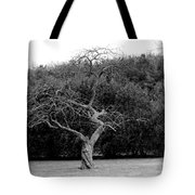 Tree Dancer Tote Bag