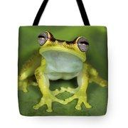 Tree Frog Hyla Rubracyla At Night Tote Bag