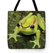 Tree Frog Hyla Rubracyla, Colombia Tote Bag
