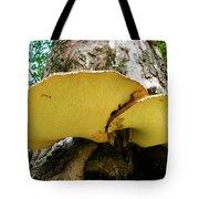 Tree Fungus 2 Tote Bag