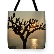 Tree In A Foggy Sunset Tote Bag