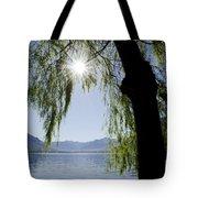 Tree In Backlight Tote Bag