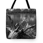 Tree Stump On The Shore Of Lewis Lake At Yellowstone Tote Bag