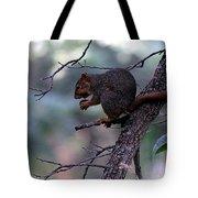 Tree Top Nut Tote Bag