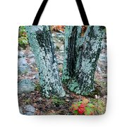 Tree Trio In Lichen At Hawn State Park Tote Bag