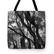 Trees Beautiful Trees Tote Bag