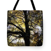 Trees During Autumn Tote Bag