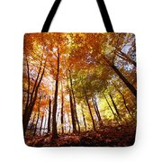 Trees In Autumn Tote Bag