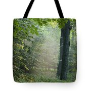 Trees In The Woods In The Early Morning Tote Bag