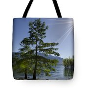 Trees With Sunbeam Tote Bag