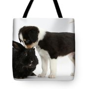 Tricolor Border Collie Pup With Black Tote Bag