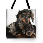 Tricolor Dachshund Puppies Tote Bag