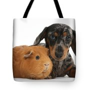 Tricolor Merle Dachshund Pup And Red Tote Bag