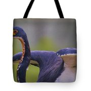 Tricolored Heron About To Fly Tote Bag