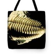 Trilobite Fossil Tote Bag