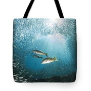 Trio Of Snappers Hunting For Bait Fish Tote Bag