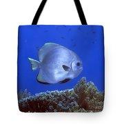Tropical Fish Bat-fish Tote Bag