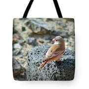 Trumpeter Finch Tote Bag
