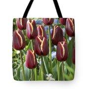 Tulip Tulipa Sp Key West Variety Flowers Tote Bag