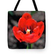 Tulips Blooming Tote Bag