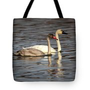 Tundra Swan And Cygnet Tote Bag