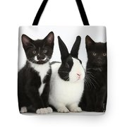 Tuxedo Kittens With Dutch Rabbit Tote Bag